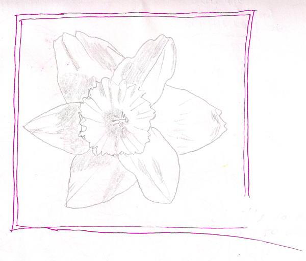 2014-03-29 daffodil-osterglocke